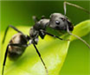 Animals in the Holy Quran – The Ant